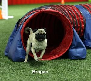Brogan in tunnel